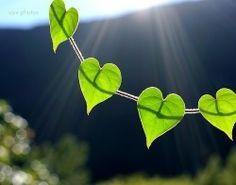 hearts linked